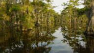 Boat POV, moving through Spanish moss-covered cypress tree swamp, reflections in water, Caddo Lake, on the Texas/Louisiana border