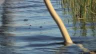 CU Boat oar in motion / Okavango Delta, Botswana