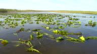 HD: Bootsfahrt In die Everglades