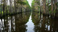WS boat POV, river lined with cypress trees and Spanish Moss, Caddo Lake, on the Texas/Louisiana border