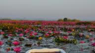 Båttur på rosa lotus lake, Udon Thani Province, THA.