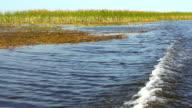 HD: Boat Wake - Everglades National Park