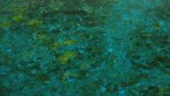 Bog water background