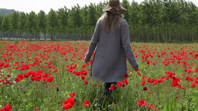 Boom overhead as woman walks into field of poppies