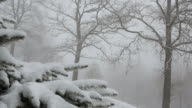 Boom shot past tree bough to meadow in snowstorm