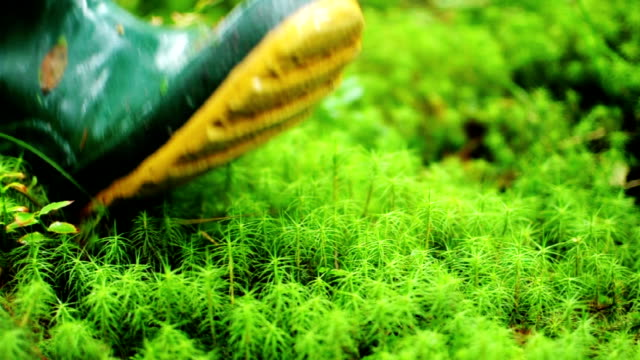 Boots - Stepping Through Moss And Green