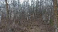 Boreal Forest in early spring