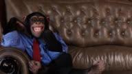Boss Chimp Big Smile