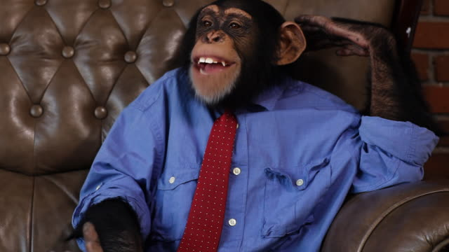 Boss Chimp