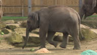 Bosses at one of Britain's leading zoos have told Sky News that recent controversies engulfing the industry around Europe shouldn't detract from the...