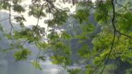 MS TD Botanical gardens lake / Calcutta, West, Bengal India