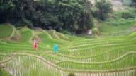both traveller try to walk along rice terrace