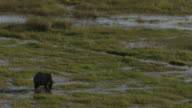 Botswana : Elephant in the okavango delta