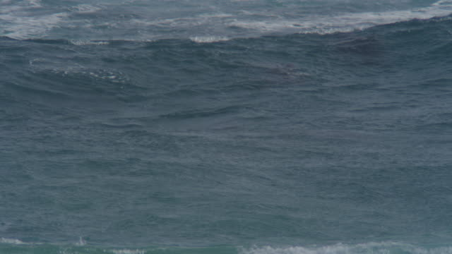 Bottlenosed Dolphin group swimming through surf towards camera