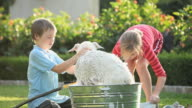 MS PAN Boy (8-9) and girl (10-11) washing White Shepherd puppy in washtub on lawn, puppy running away from tub / Richmond, Virginia, USA