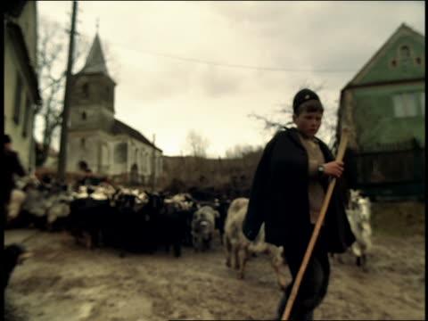 MS boy shepherd in native dress walking with herd of goats on village road / Sibiu, Transylvania