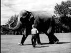 B/W WS 1940 Boy (11-12) walking alongside elephant tapping behind its front legs with cane / USA