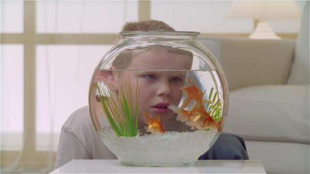 CU boy watching goldfish eat