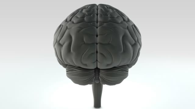 Brain LOOP Series
