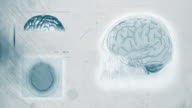 brain scan 4k white backgroung digital