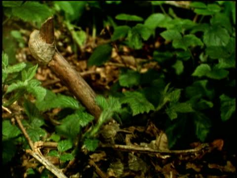 Brambles grow upwards from forest floor
