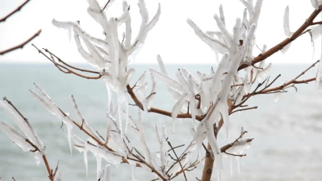 branch of tree, covered ice with sea on background