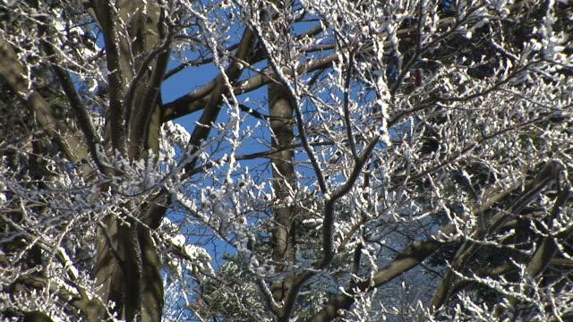 HD: Zweige im Schnee bedeckt.