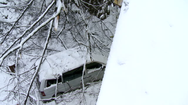 Branches Fell On To A Car