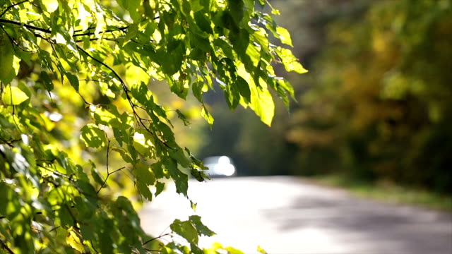 Branches with brightly lit leaves near the road.