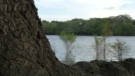 Brazilian chestnut tree with river at background - PAN CAM