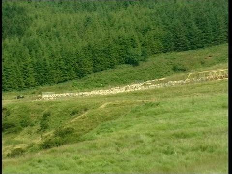 LIB WALES Brecon Beacons EXT LSs Sheep in coral on hillside LS Officials beside tarpaulincovered pens on hillside Order Ref T04080115