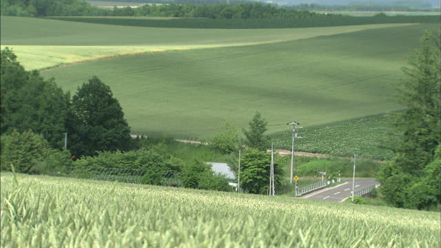 A breeze blows through a verdant wheat field.