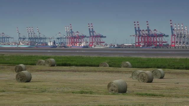 MS T/L Bremerhaven Container Terminal, field in foreground / Bremerhaven, Bremen, Germany