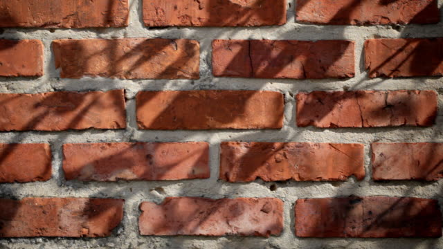 Brick wall with leaf shadows