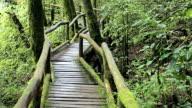 Brücke in den Dschungel in Doi inthanon national park
