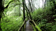 Bridge in to the jungle at Doi inthanon national park