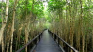 Bridge walkway in mangrove trees.