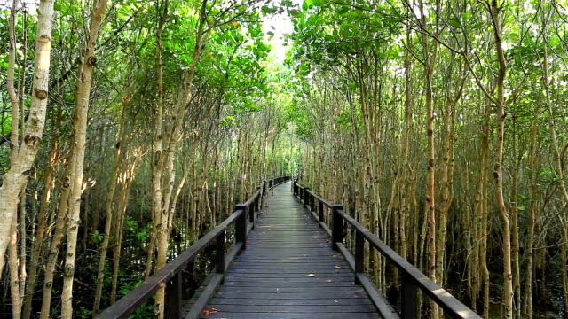 Brücke Gehweg in Mangroven.