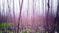 Autunno Foresta brillante