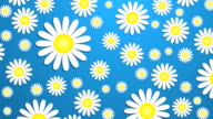 Bright Daisy Wallpaper 1 - (HD Loop)