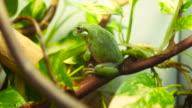 Bright Green Tree Frog