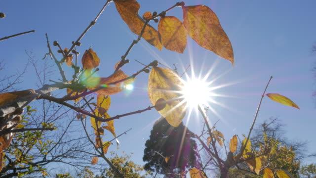 Bright sunlight from tree branches, Chichibu