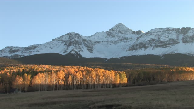 MS  Brillant Yellow Aspen Trees, Rocky Mountains, Fall Colors / Telluride, Colorado, United States
