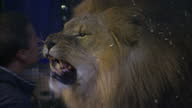 Britain's last remaining lion tamer has said he's determined to keep touring the UK despite increasing opposition from animal rights campaigners...