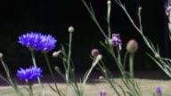 British Wild Flowers Blooming