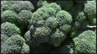 (HD1080i) Broccoli Heads
