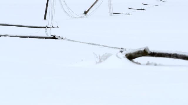 Broken Power Poles In Snow