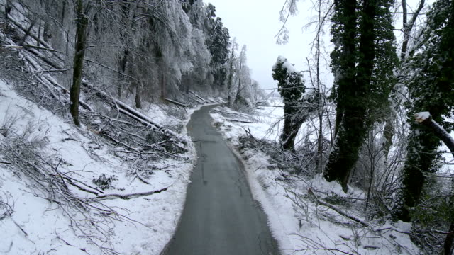 Broken Trees By The Roadside