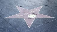 Broll pan and zoom of Gabor's star and flowers