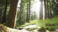 WS Brother (8-9) and sister (10-11) running in Squamish Alice Lake Park / Squamish, British Columbia, Canada